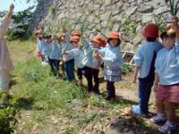 柳井幼稚園 農業体験